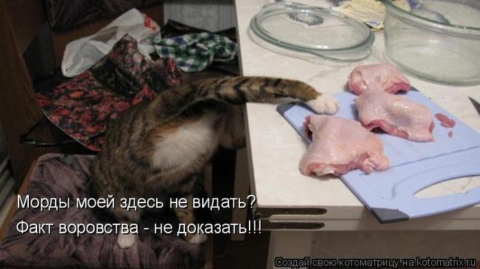 kotomatritsa_uo (700x392, 238Kb)