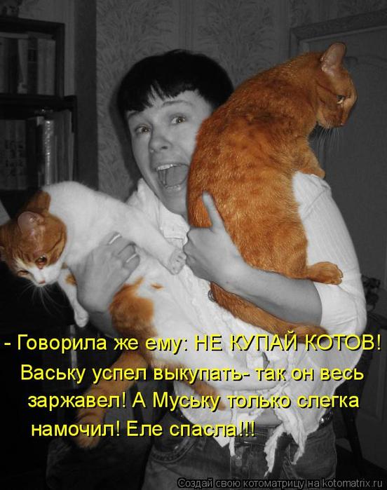 kotomatritsa_l (552x700, 331Kb)