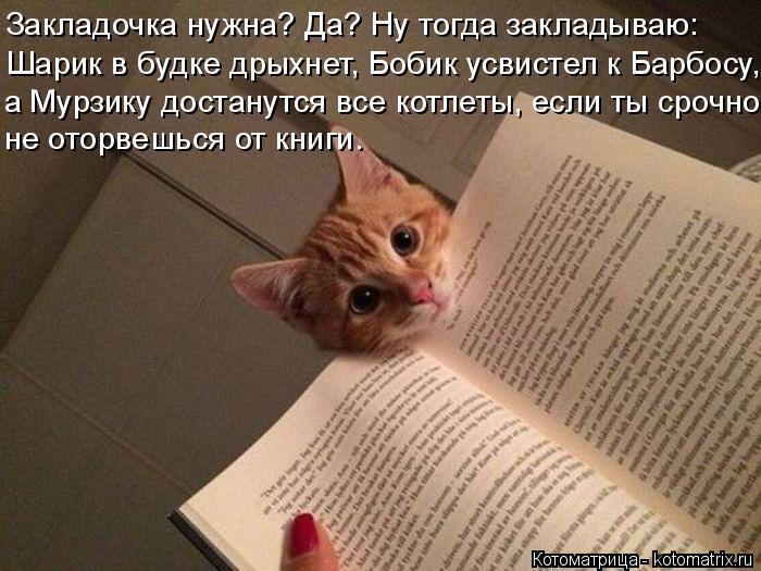 kotomatritsa_8r (700x525, 257Kb)