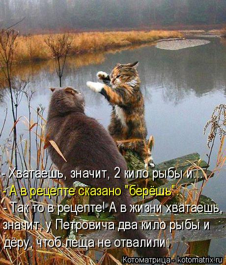 kotomatritsa_J (460x540, 267Kb)