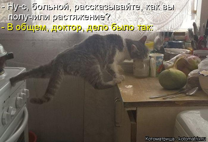 kotomatritsa_Lx (700x480, 201Kb)