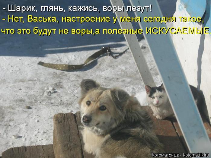 kotomatritsa_M5 (700x524, 351Kb)