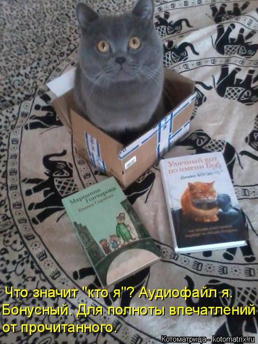 kotomatritsa_PM (524x700, 409Kb)