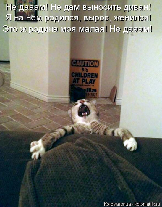 kotomatritsa_S (1) (548x700, 362Kb)