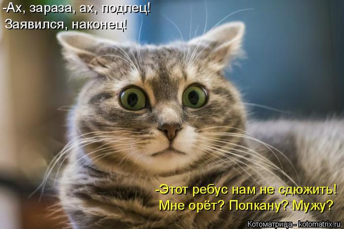 kotomatritsa__ (700x465, 291Kb)