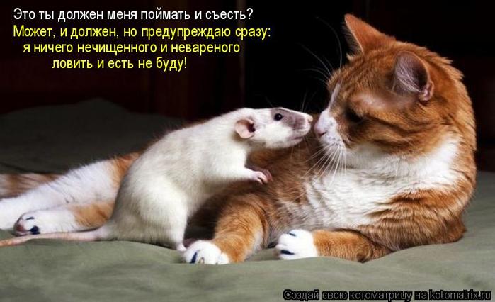 kotomatritsa_Bc (700x426, 266Kb)
