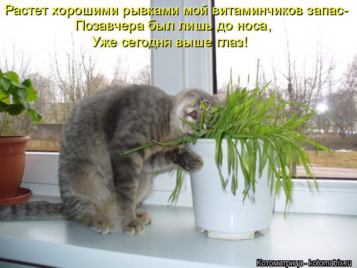 kotomatritsa_Dy (700x524, 343Kb)