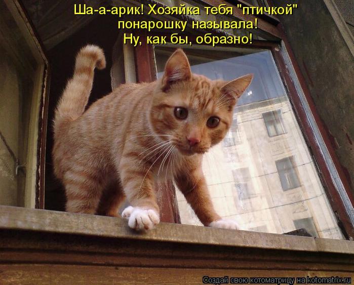 kotomatritsa_EG (700x563, 423Kb)