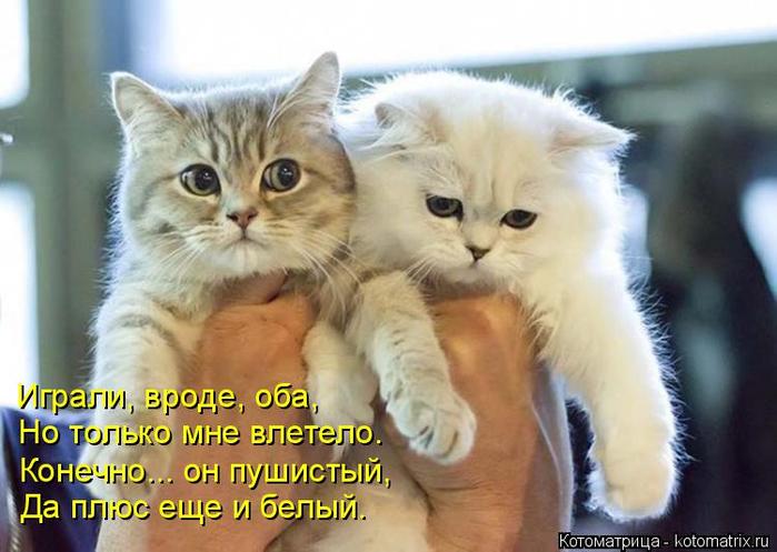 kotomatritsa_j (700x497, 323Kb)
