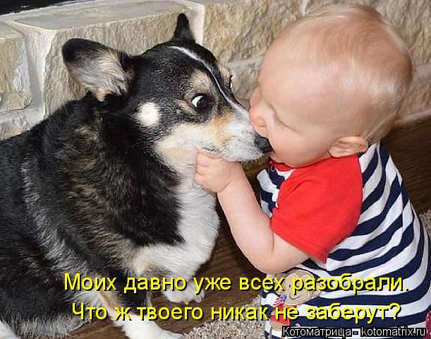 kotomatritsa_l (1) (611x480, 242Kb)