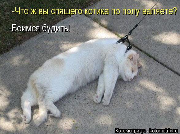 kotomatritsa_Mk (586x436, 179Kb)