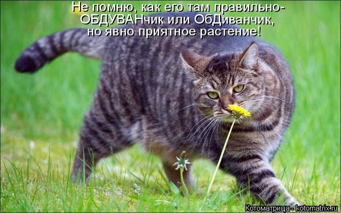 kotomatritsa_P (1) (700x437, 357Kb)