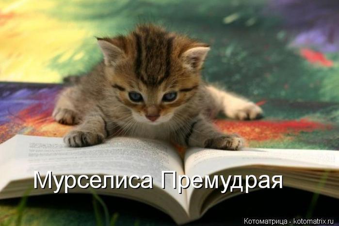 kotomatritsa_cH (700x466, 266Kb)