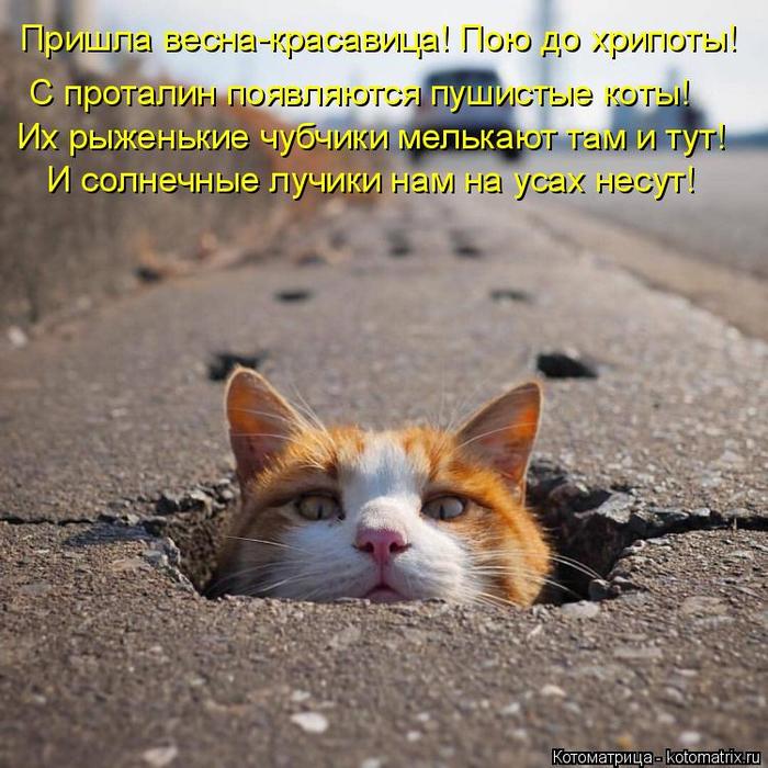 kotomatritsa_- (700x700, 504Kb)
