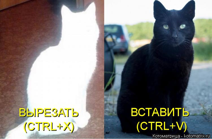 kotomatritsa_Db (700x459, 244Kb)