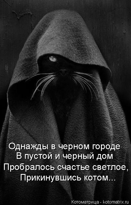 kotomatritsa_Q (449x700, 183Kb)