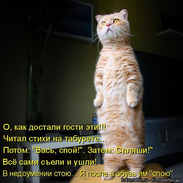 kotomatritsa_V (1) (640x640, 252Kb)
