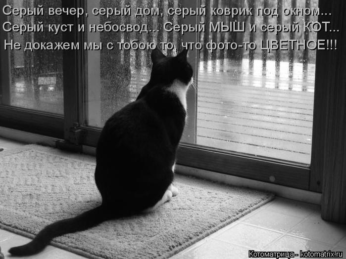 kotomatritsa_Zy (700x524, 221Kb)