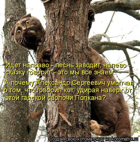 kotomatritsa_3L (493x500, 297Kb)
