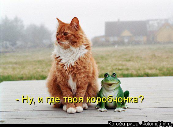 kotomatritsa_9p (565x414, 156Kb)