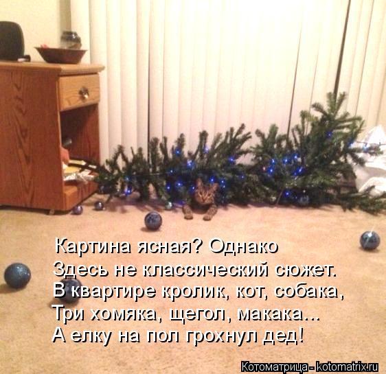 kotomatritsa_b (562x545, 263Kb)
