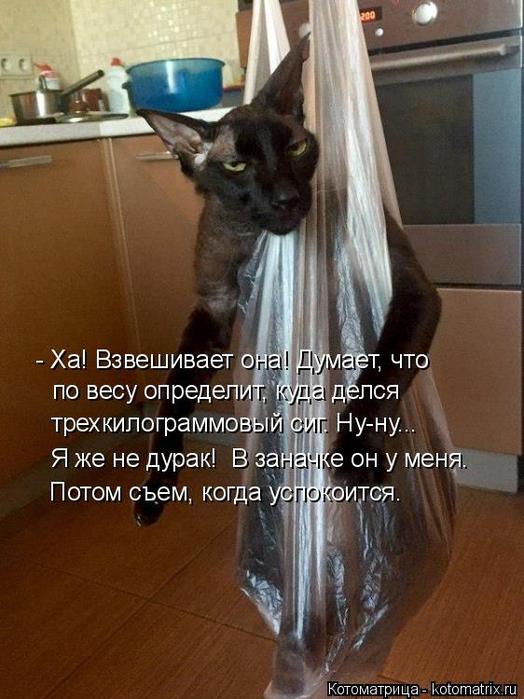 kotomatritsa_GW (524x700, 357Kb)