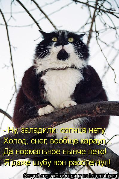 kotomatritsa_KR (398x600, 203Kb)