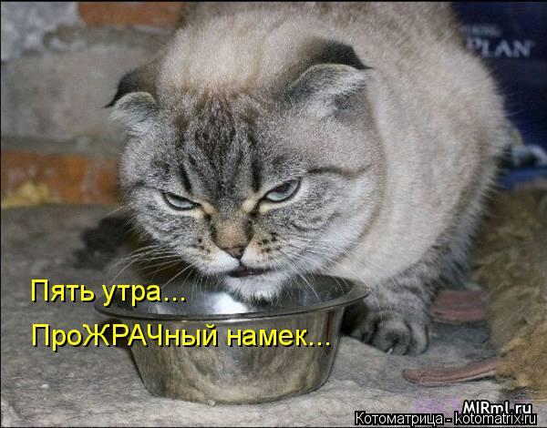 kotomatritsa_lu (600x470, 175Kb)