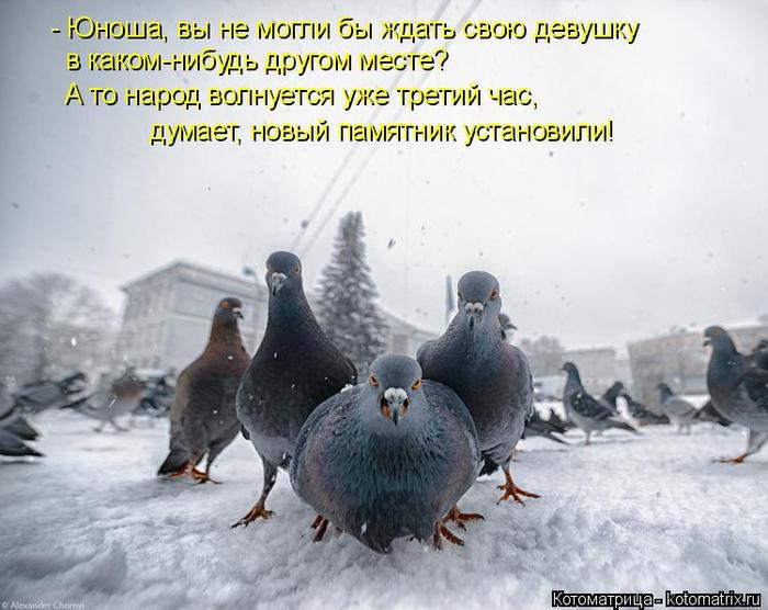 kotomatritsa_vK (700x556, 320Kb)