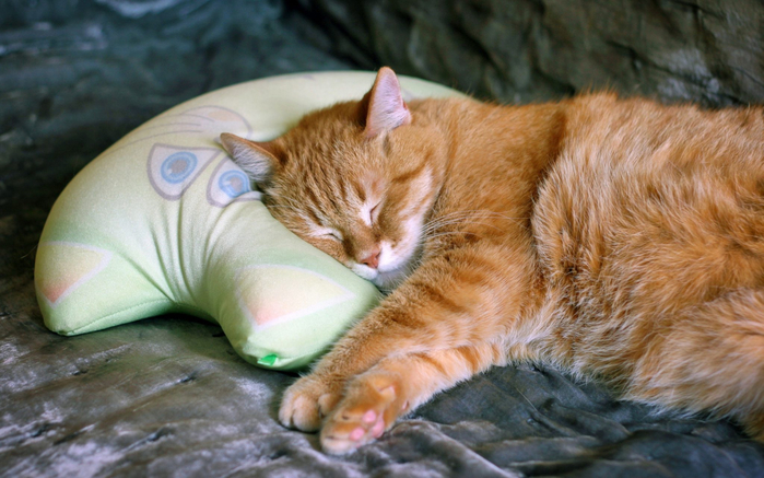 2019Animals___Cats_Beautiful_red_cat_sleeps_on_a_pillow_137370_19-2048x1280 (700x437, 359Kb)
