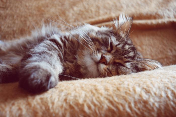 cat_sleep-1536x1024 (700x466, 537Kb)