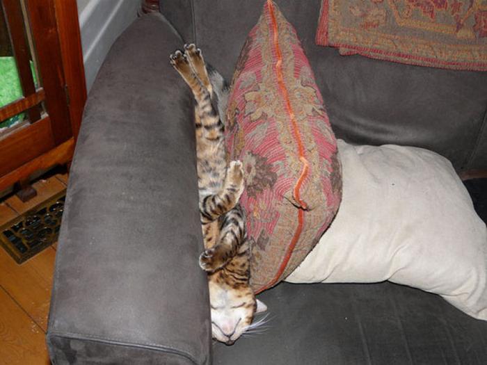 gatos_dormindo_qualquer_lugar_30 (700x525, 323Kb)