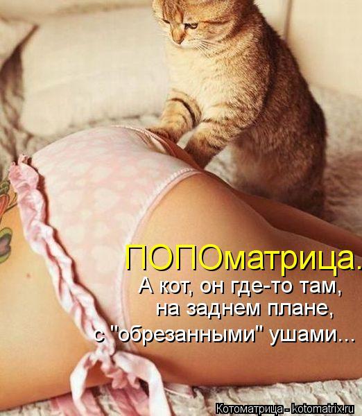 kotomatritsa_D8 (522x600, 243Kb)