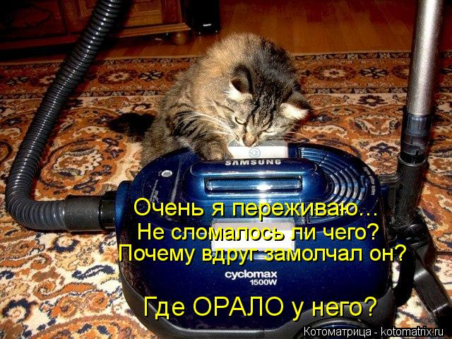 kotomatritsa_se (640x480, 382Kb)