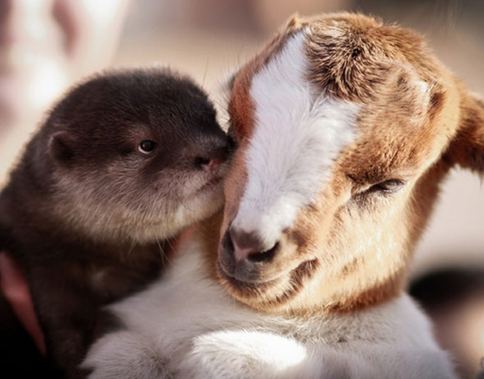 Otter-Have-A-Friend-Like-This (700x548, 294Kb)