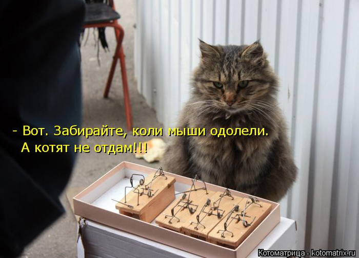 kotomatritsa_5q (700x502, 271Kb)