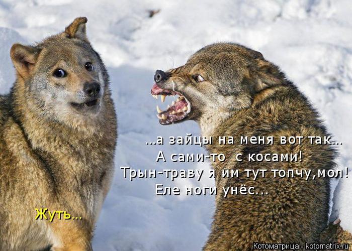 kotomatritsa_b8 (700x500, 388Kb)