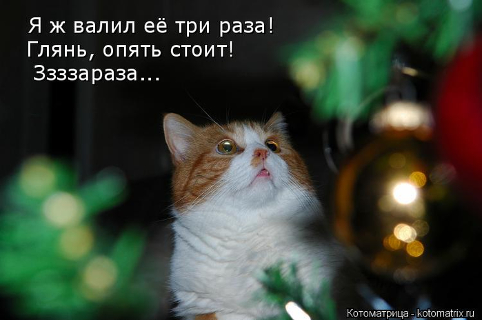 kotomatritsa_Dq (700x464, 222Kb)
