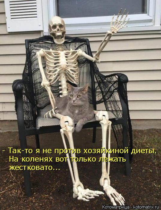 kotomatritsa_he (537x700, 400Kb)