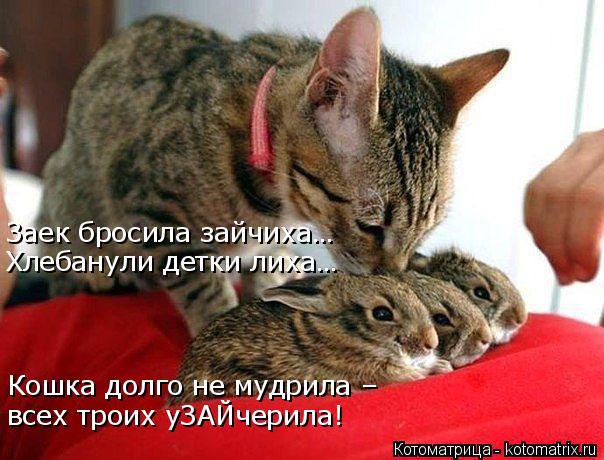 kotomatritsa_kl (604x460, 251Kb)