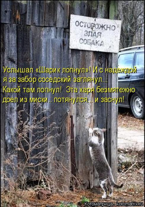 kotomatritsa_N1 (490x700, 411Kb)