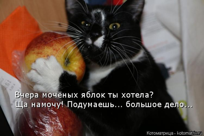 kotomatritsa_pyy (700x465, 220Kb)