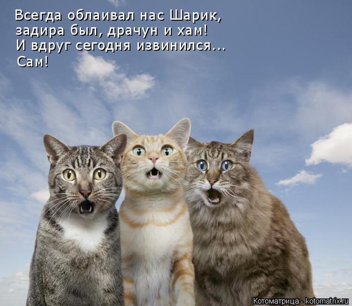 kotomatritsa_QW (700x607, 331Kb)