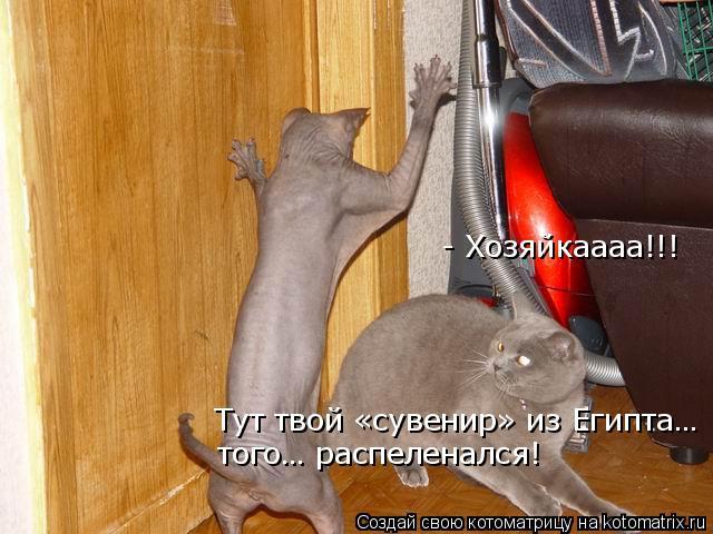 kotomatritsa_Tx (640x480, 215Kb)