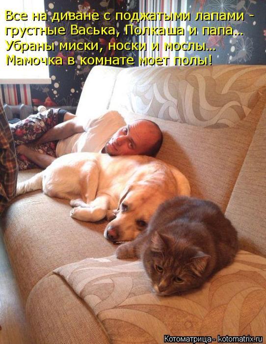 kotomatritsa_u5 (542x700, 444Kb)