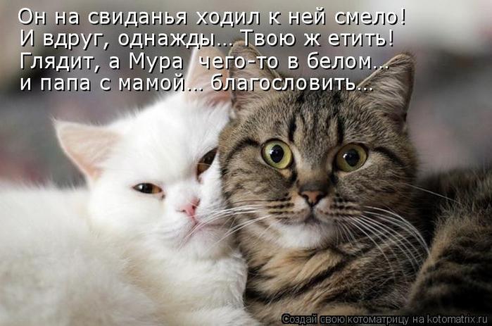kotomatritsa_Vm (700x463, 287Kb)