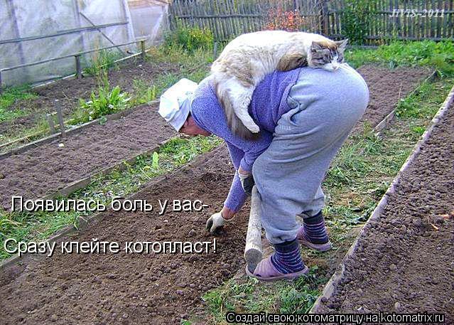 kotomatritsa_A (639x457, 315Kb)