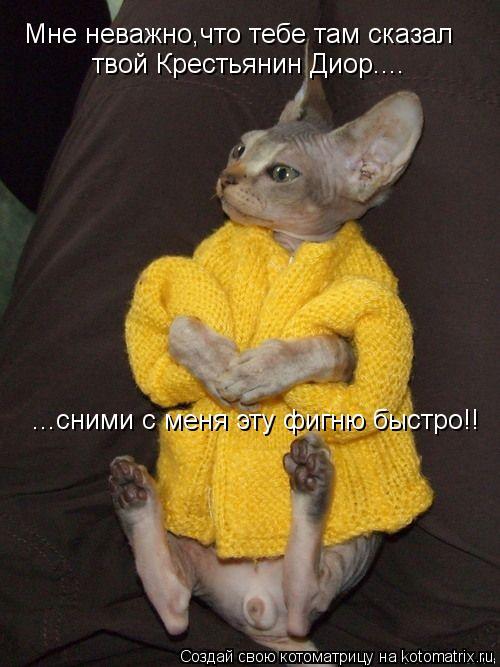 kotomatritsa_Jd (500x667, 223Kb)