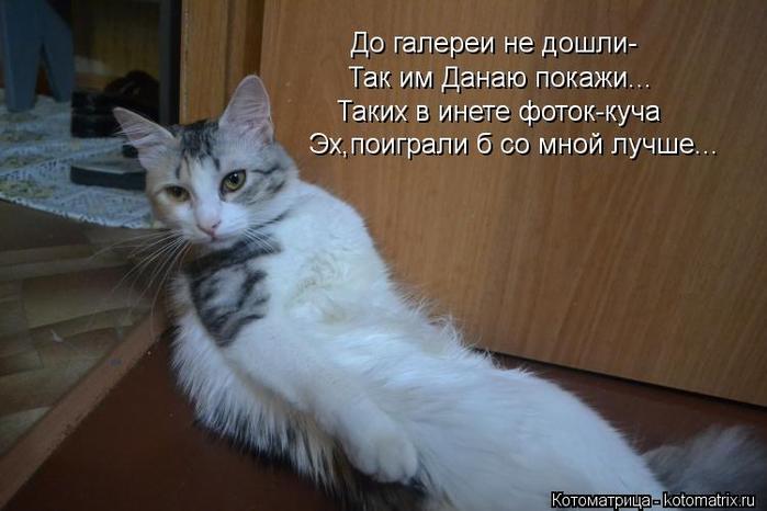 kotomatritsa_NI (700x466, 261Kb)