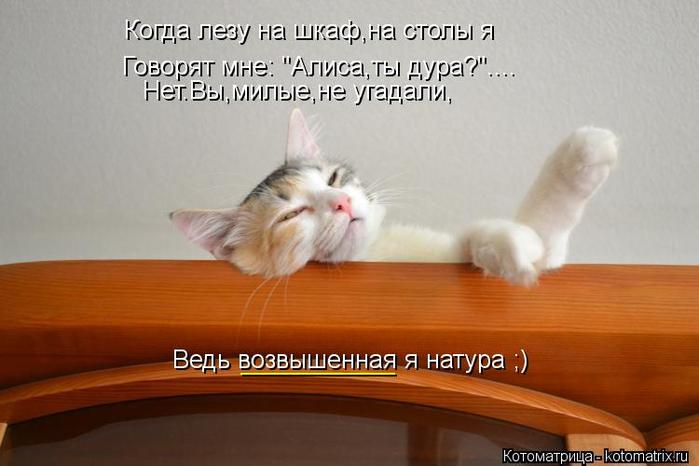 kotomatritsa_T4 (700x466, 239Kb)